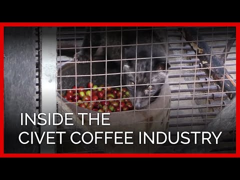 Is There Cruelty in Your Coffee?