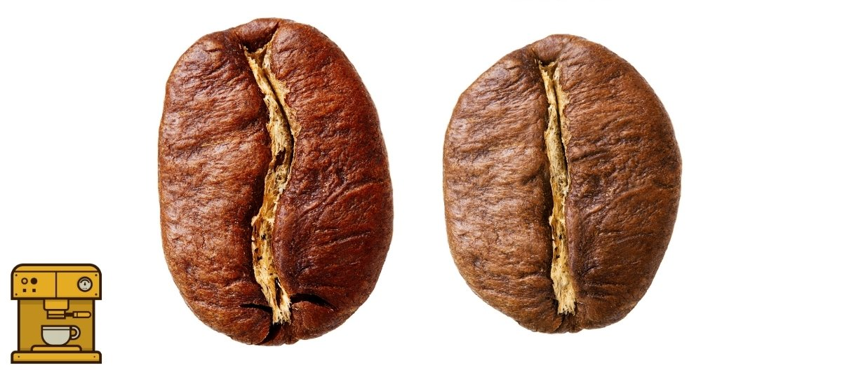 Robusta vs Arabica koffiebonen
